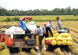 Hai Duong with the promotion of agricultural restructuring