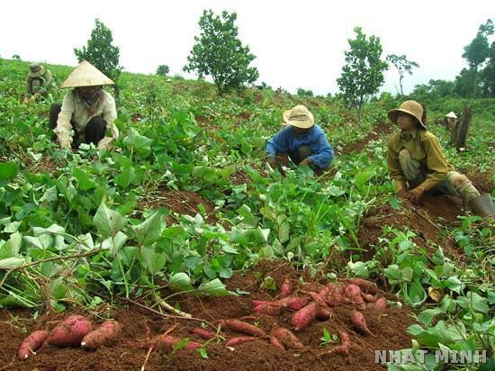 Việt Nam được hỗ trợ tiếp cận thị trường và bảo vệ rừng phòng hộ ven biển