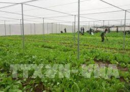 Ứng dụng mạng lưới kết nối internet trong nông nghiệp công nghệ cao