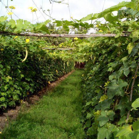 Hướng tới một nền nông nghiệp công nghệ cao bền vững và hiệu quả