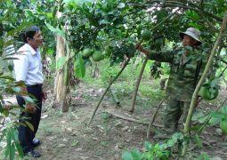 Xây dựng Nông thôn mới Khánh Hòa: Ưu tiên phát triển sản xuất, nâng cao thu nhập cho người dân