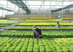 Ngành Nông nghiệp Tỉnh Đồng Nai: Đẩy mạnh áp dụng khoa học kỹ thuật vào nông nghiệp