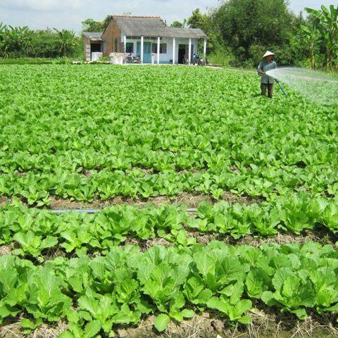 Tiền Giang: Thành công từ ứng dụng công nghệ cao vào sản xuất nông nghiệp
