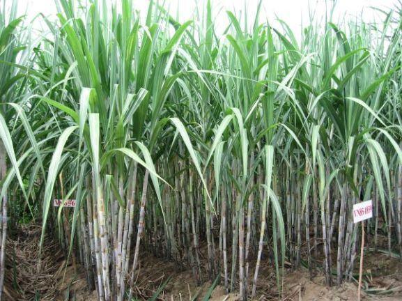 Hậu Giang: Cần thu hút doanh nghiệp đầu tư vào nông nghiệp