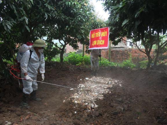 Quảng Ninh: UBND tỉnh chỉ đạo tập trung khống chế dịch tả lợn Châu Phi