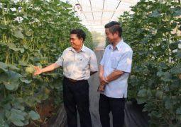 Nông nghiệp Đắk Lắk: Tái cơ cấu sản phẩm chủ lực