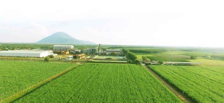 Tây Ninh: Nông nghiệp xanh bền vững tương lai cho cây mía Việt Nam