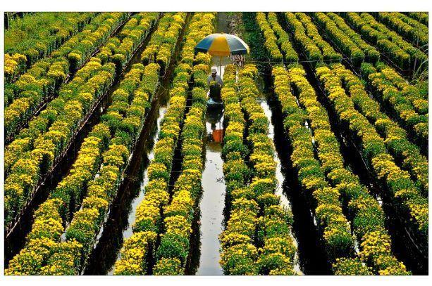 Ngành Nông nghiệp Đồng Tháp: Củng cố mối lien kết sản xuất, đa dạng hóa loại hình hợp tác