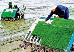 Ngành Nông nghiệp Long An: Đổi mới toàn diện mô hình tăng trưởng