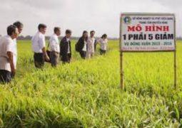 Trung tâm Khuyến nông tỉnh Kiên Giang – Đồng hành phát triển cùng Tam nông