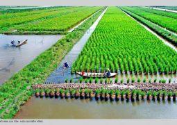 Nông nghiệp Cà Mau chủ động ứng phó biến đổi khí hậu