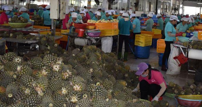 Công ty TNHH Quốc Thảo: Khát vọng làm giàu cùng nông dân